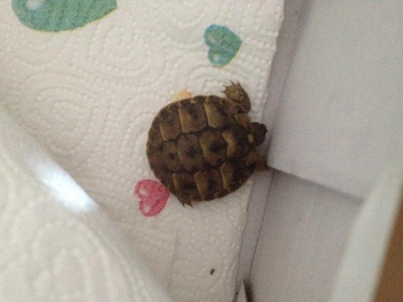 Pilou-pilou est un tortue de ???? Photo11