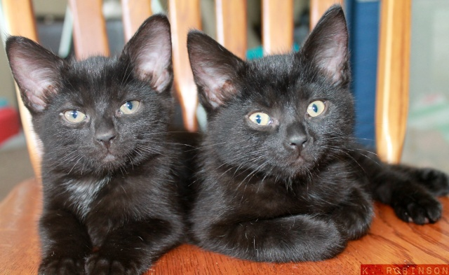 Kittens!  Mausha10