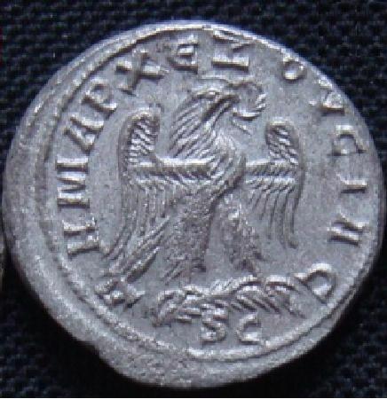 Tétras d'Antioche 21510