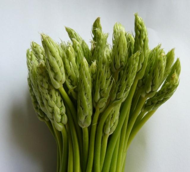 Ornithogalum pyrenaicum - asperge des bois [devinette] Ornyth10