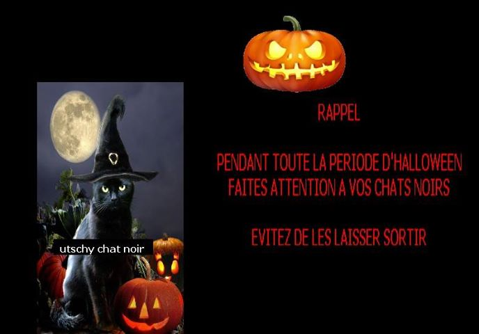 Chats noirs - Page 3 10616410