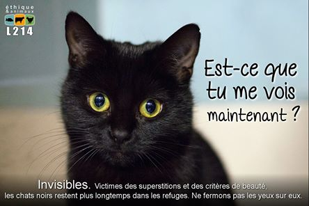 Chats noirs - Page 3 15127610