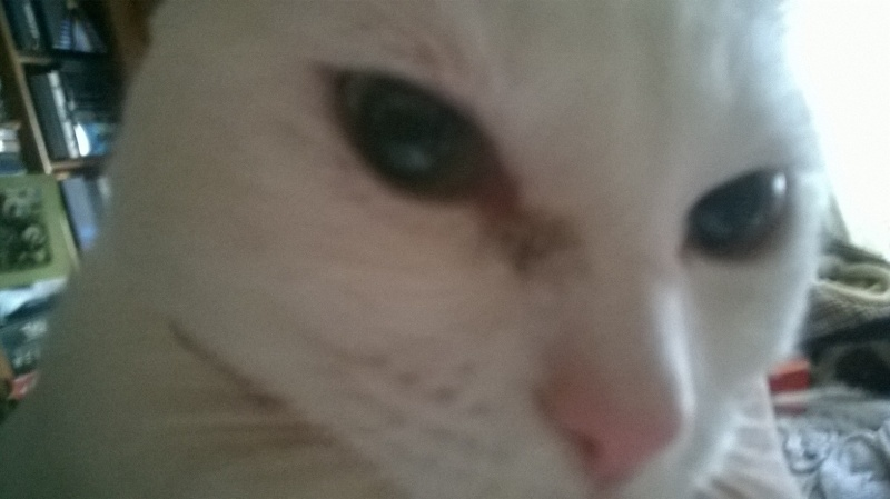 Problème sorte de tache-croute aux yeux allant vers le museau Wp_20111
