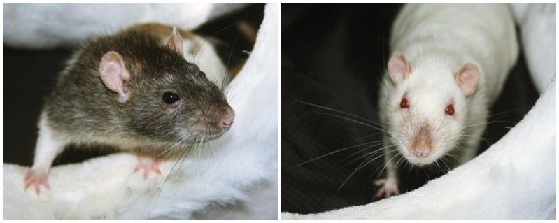 Les Hoop & Rats - Page 4 Uguigi10