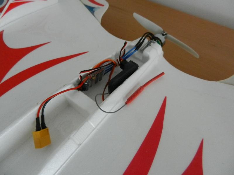 Ziggy Mini Wing ! Dscn5414