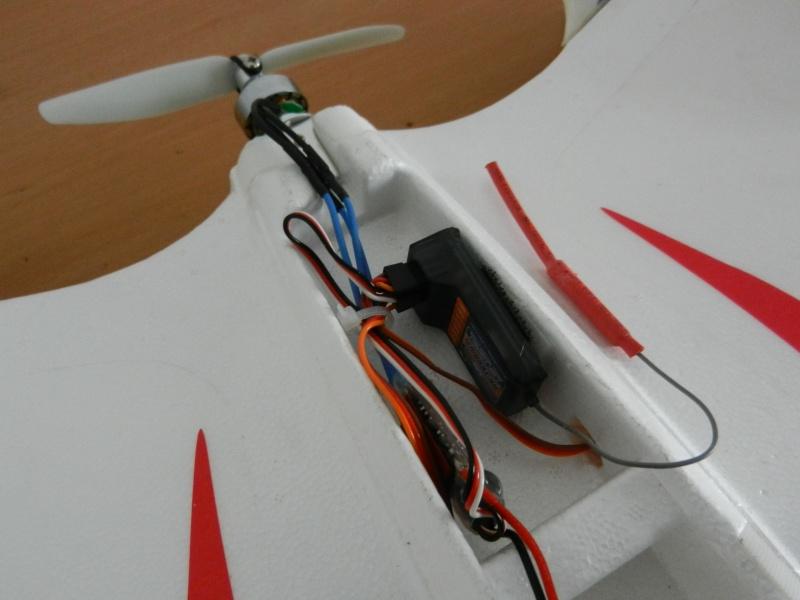 Ziggy Mini Wing ! Dscn5415