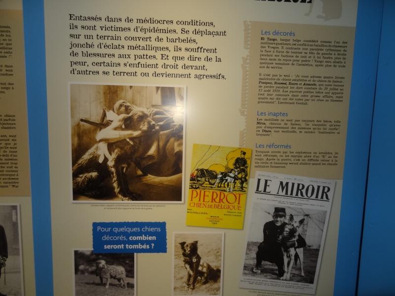 Le chien pendant la 1ère guerre mondiale Dsc00911