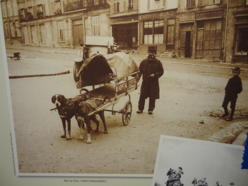 Le chien pendant la 1ère guerre mondiale Dsc00912