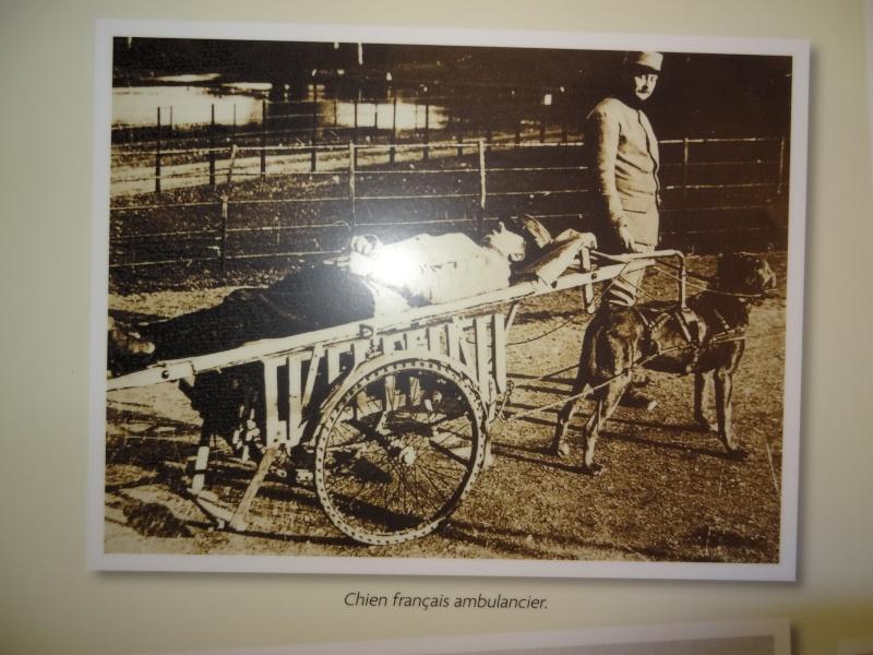 Le chien pendant la 1ère guerre mondiale Dsc00914