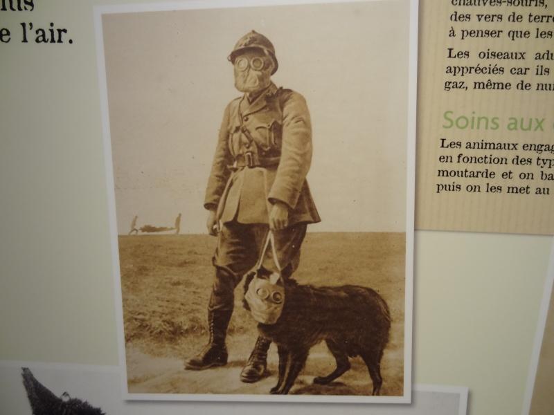 Le chien pendant la 1ère guerre mondiale Dsc00915
