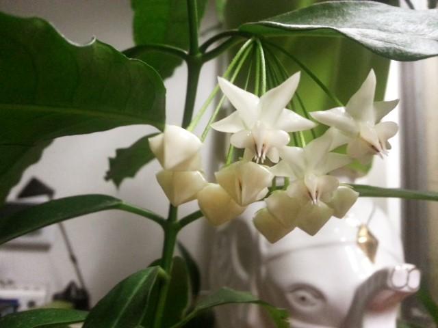 Blüten 2014 - Seite 24 Lockii11