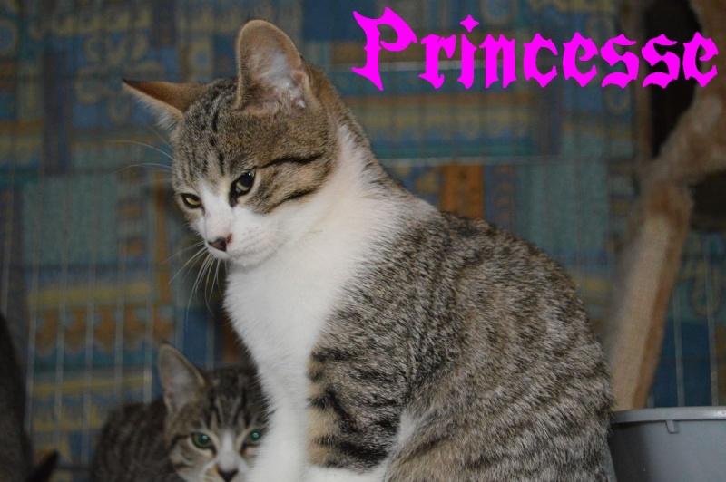 Princesse  Prince13