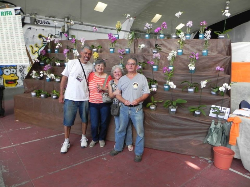 Mise en scéne des orchidées en exposition  10402511