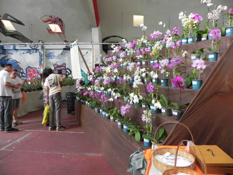 Mise en scéne des orchidées en exposition  10563011