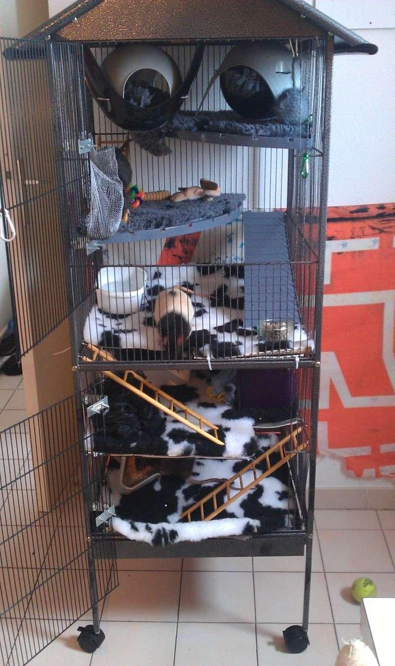 echange grande cage contre petite dans le 06 Imag1310