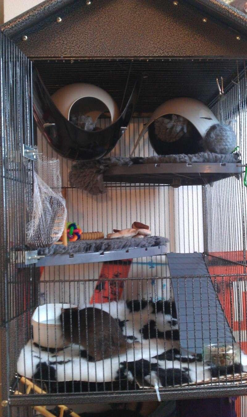 echange grande cage contre petite dans le 06 Imag1311