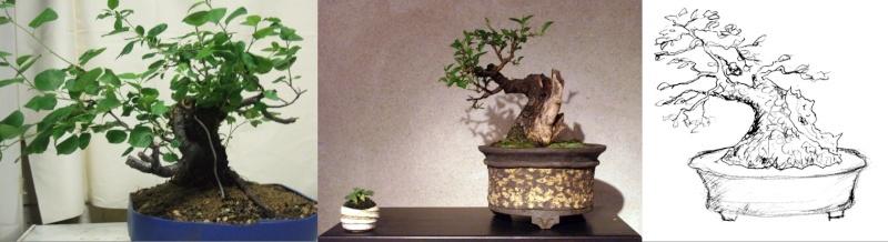 Prunus Mahaleb Image110