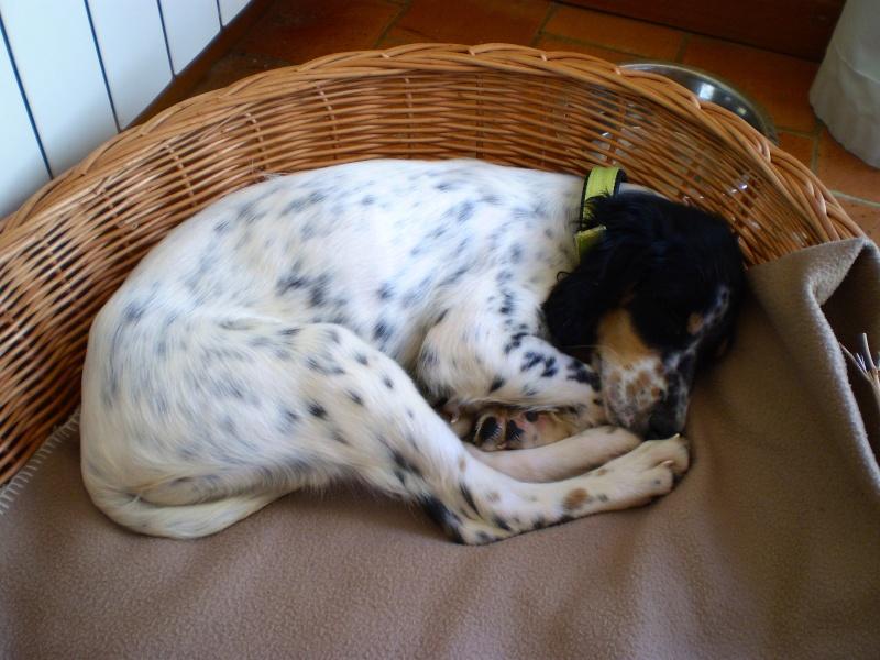 Un chien à la maison Pa090010