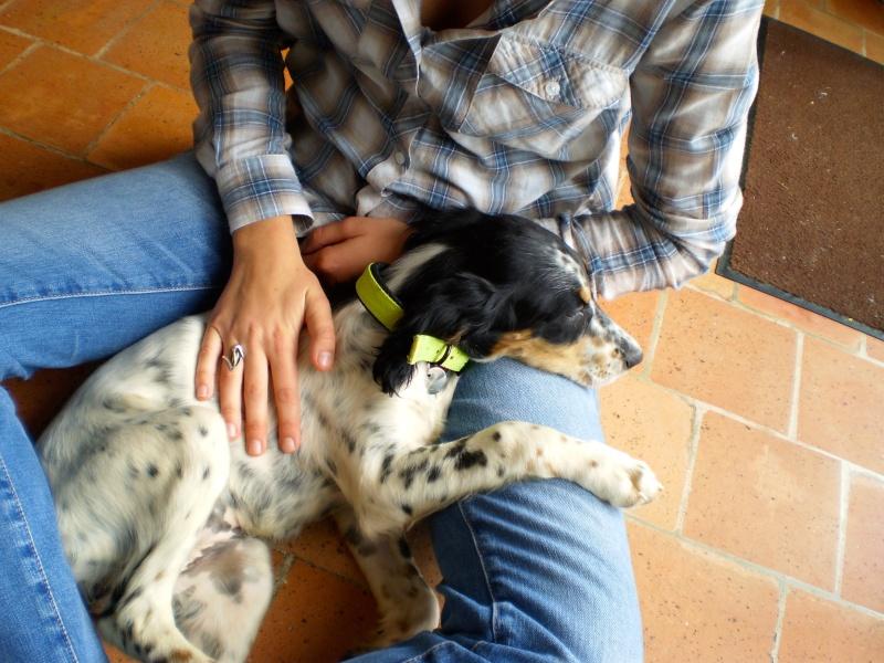 Un chien à la maison Pa090011