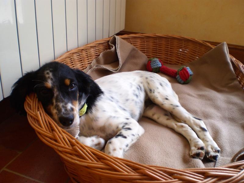 Un chien à la maison Pa100010