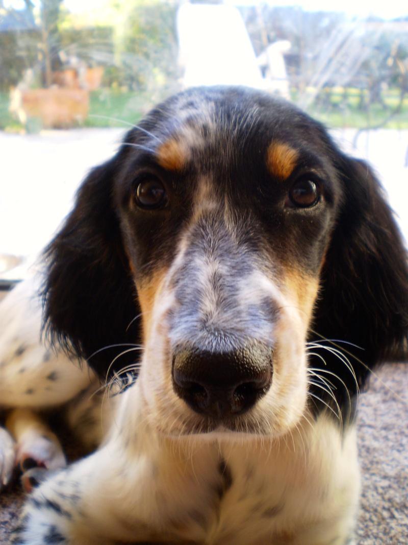 Un chien à la maison Pa180113