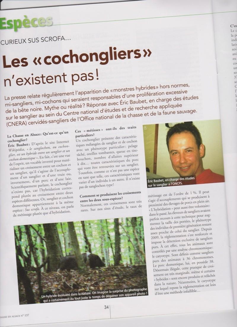 LE COCHONGLIER N'EXISTE PAS 1310