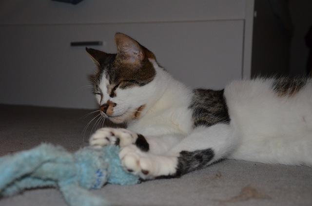 Adoption Merlin Dsc_0014