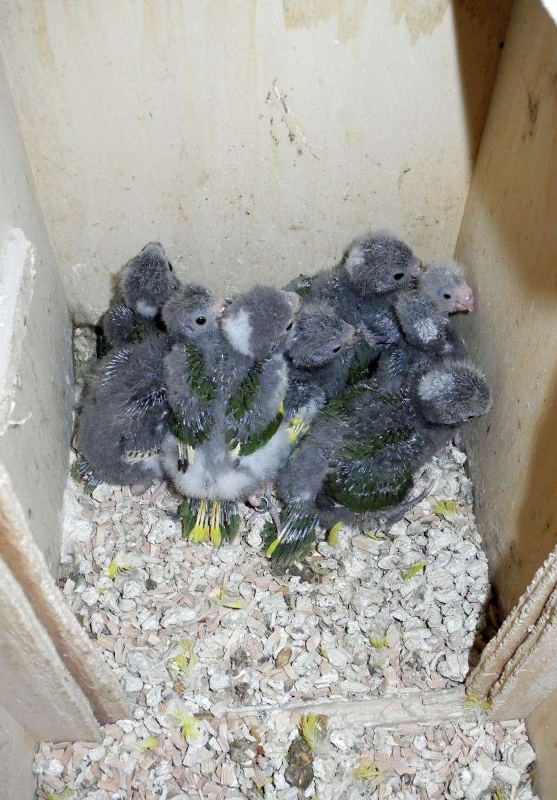 9 oeufs 8 naissances!!! Bybys_10