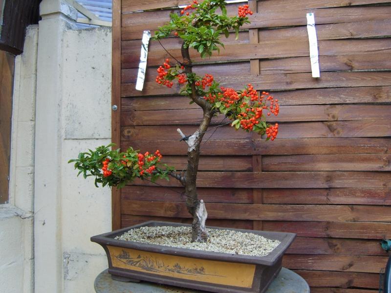 mes bonsaïs - Page 7 27aout19