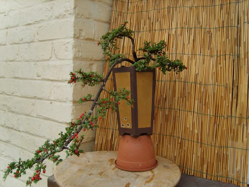 mes bonsaïs - Page 7 27aout20