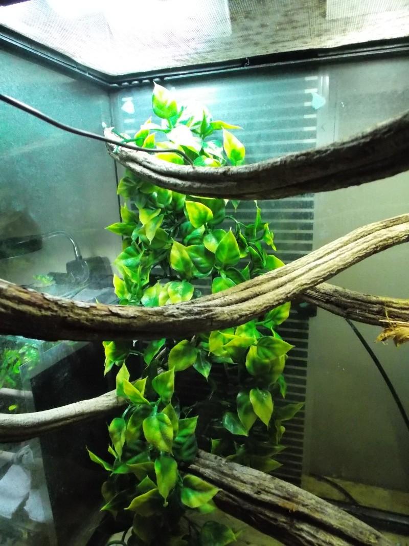 Installation Morelia viridis juvenile - Page 3 Dscn3212