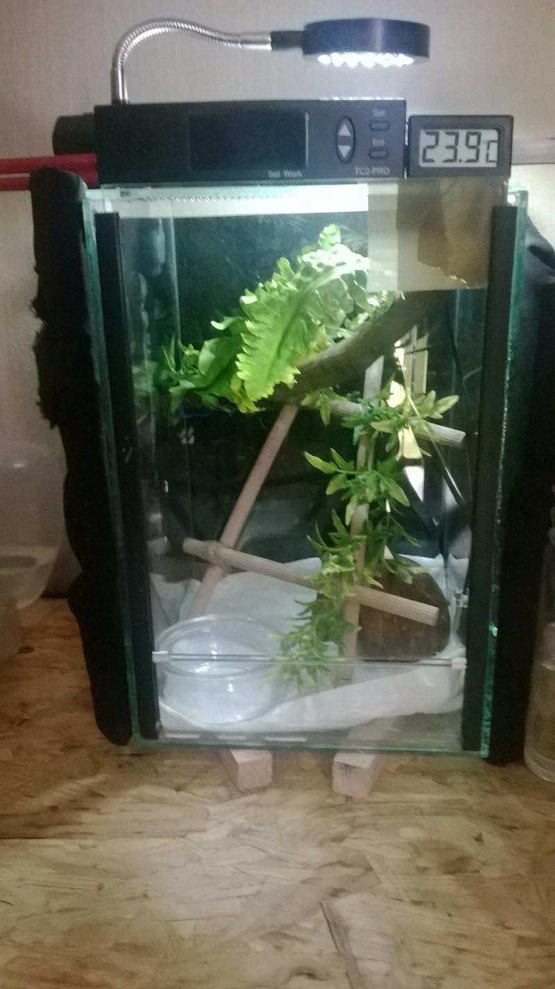 Installation Morelia viridis juvenile Wp_20112