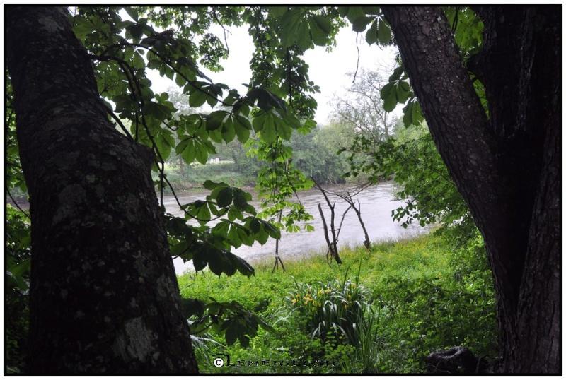 Fishing in the rain Le_che10
