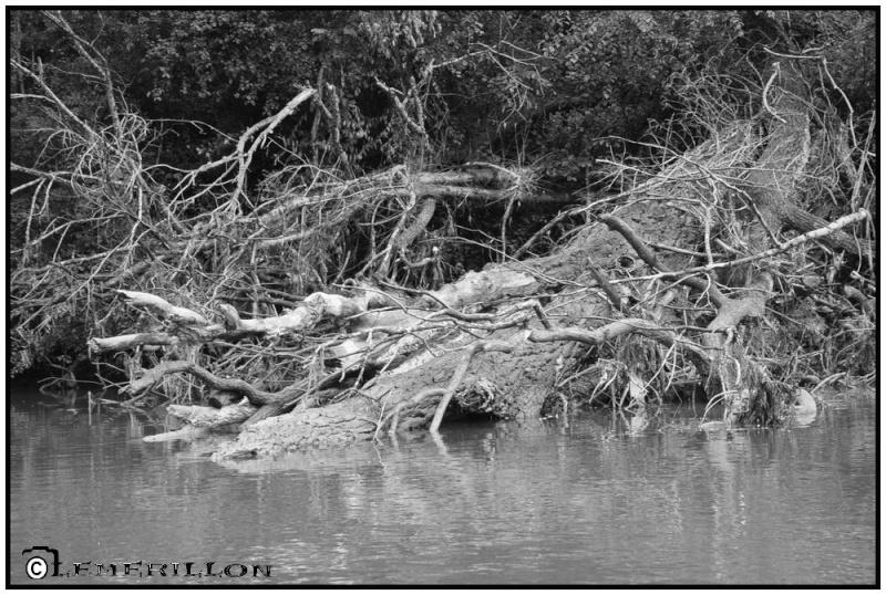 Fishing in the rain Le_che11