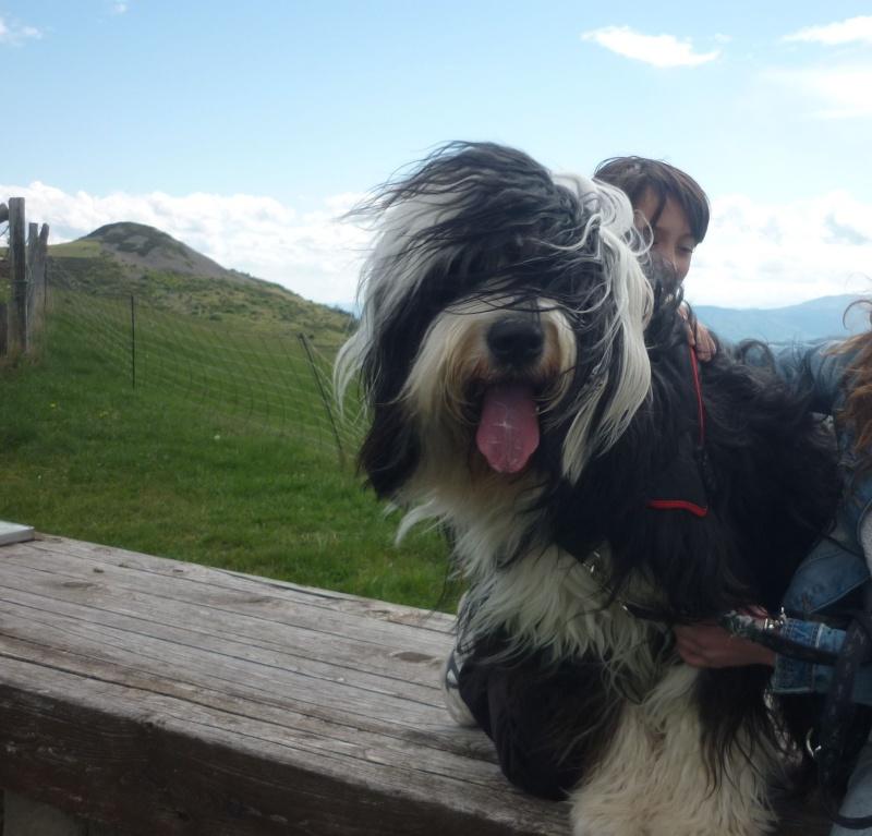 Vos chiens et leurs harnais! Photo  - Page 5 P1080210