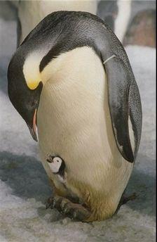 Les mamans et leur bébé 732d3f10