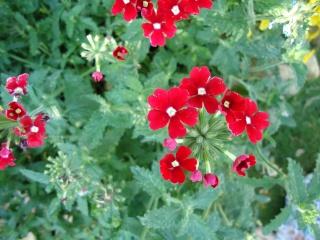 Musique et fleurs ahhhh vive le mois de juin  - Page 3 00810