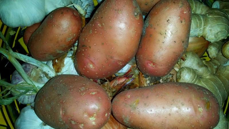 Des petites pommes de terre A19