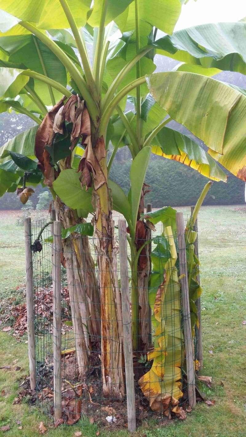 Protéger ses jeunes plants avec des fougères A26
