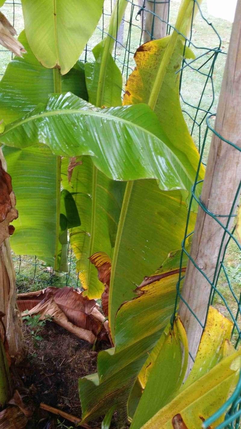 Protéger ses jeunes plants avec des fougères B20