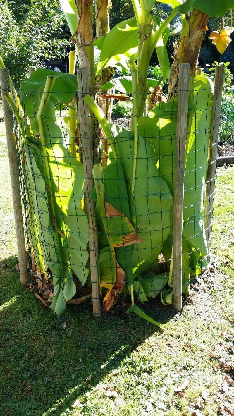 Protéger ses jeunes plants avec des fougères C20