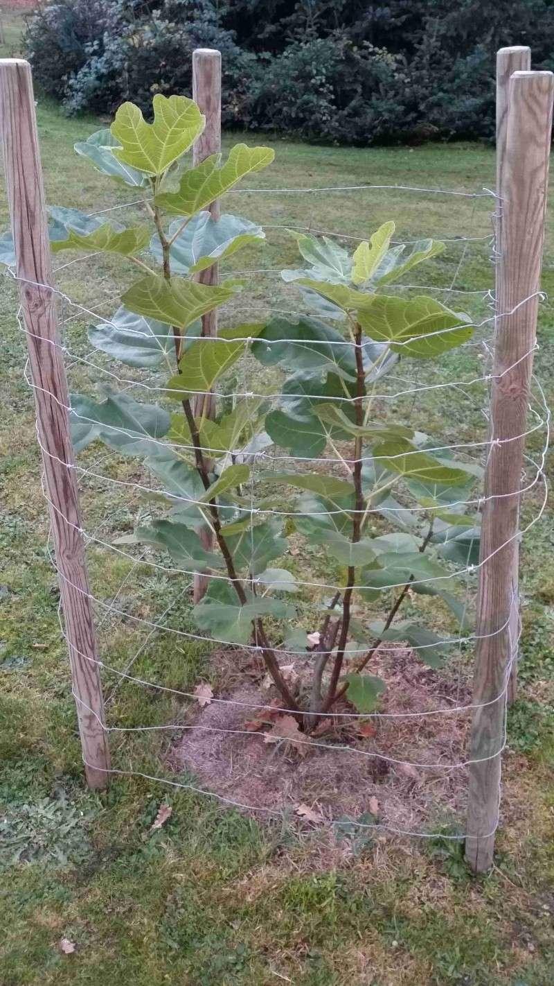 Protéger ses jeunes plants avec des fougères E15