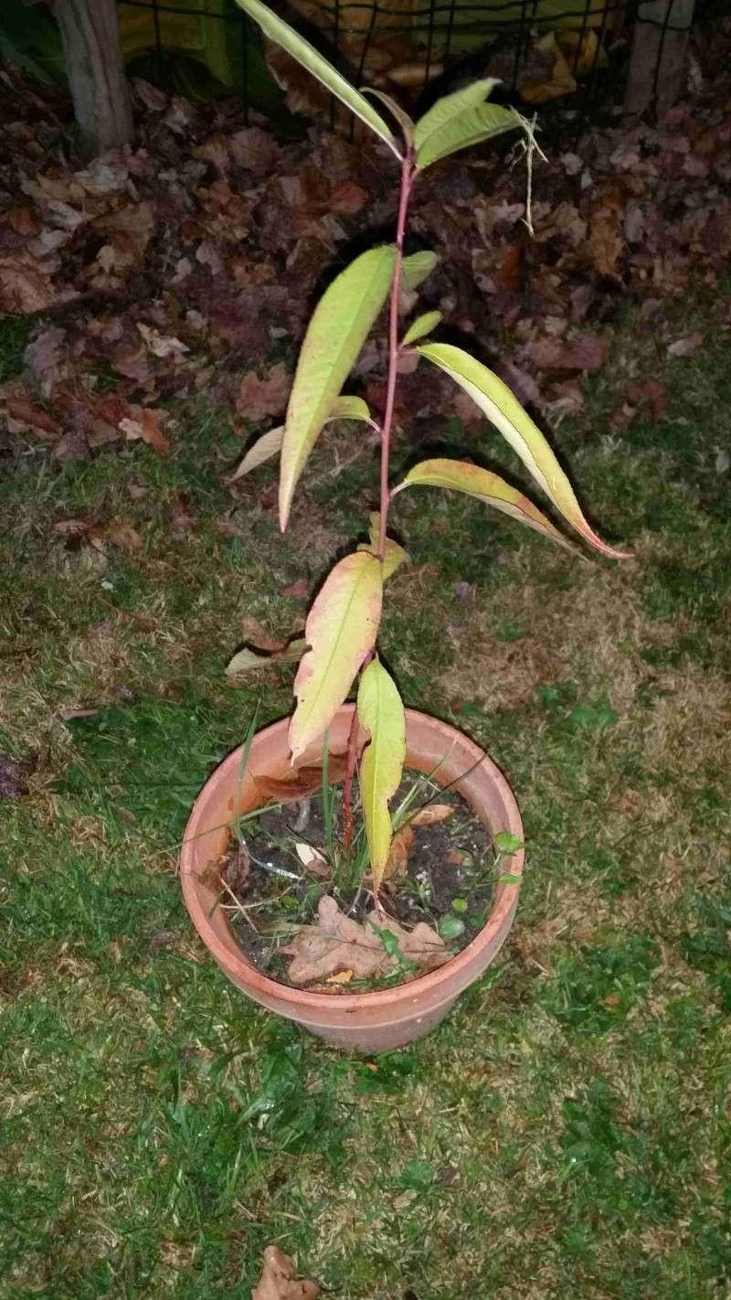 Protéger ses jeunes plants avec des fougères G13