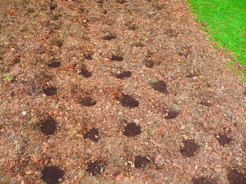 Des petites pommes de terre P1350531