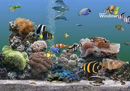 mon nouvel aquarium  - Page 2 Images10