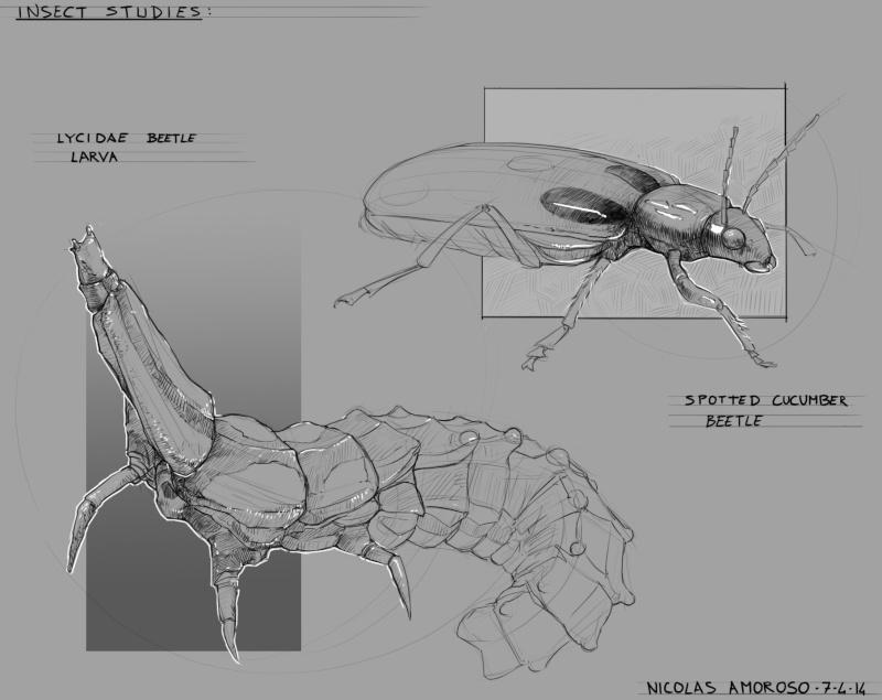 [tuto] Planing d'entrainement aux croquis - Deuxiéme salve. Insect10