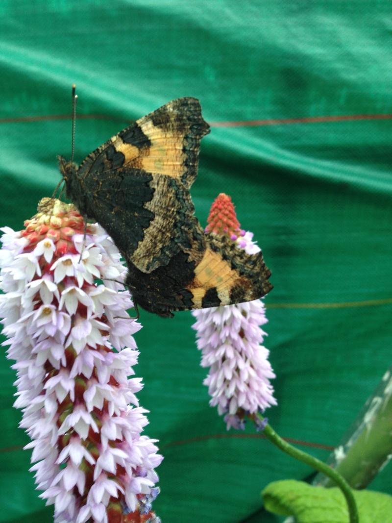 Serre à papillons. Img_0315