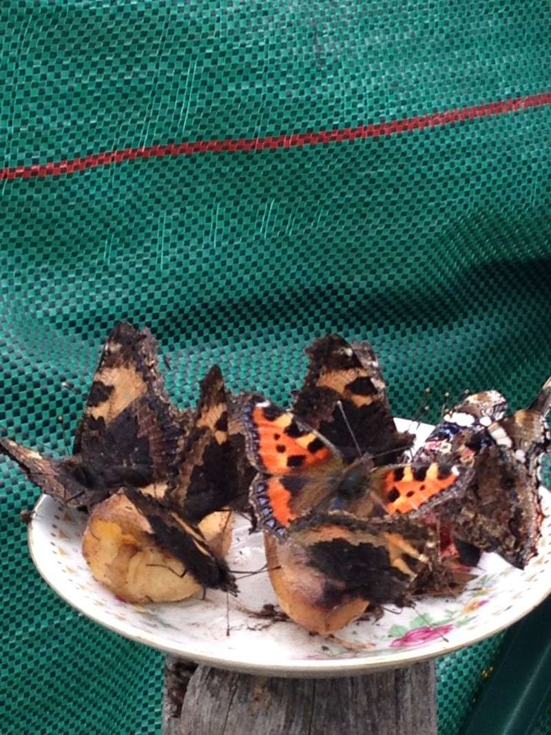 Serre à papillons. Img_0318