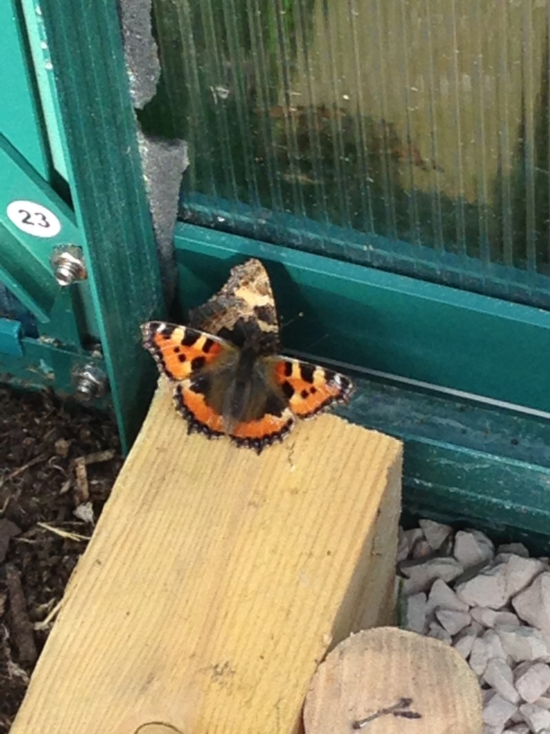 Serre à papillons. Img_0321