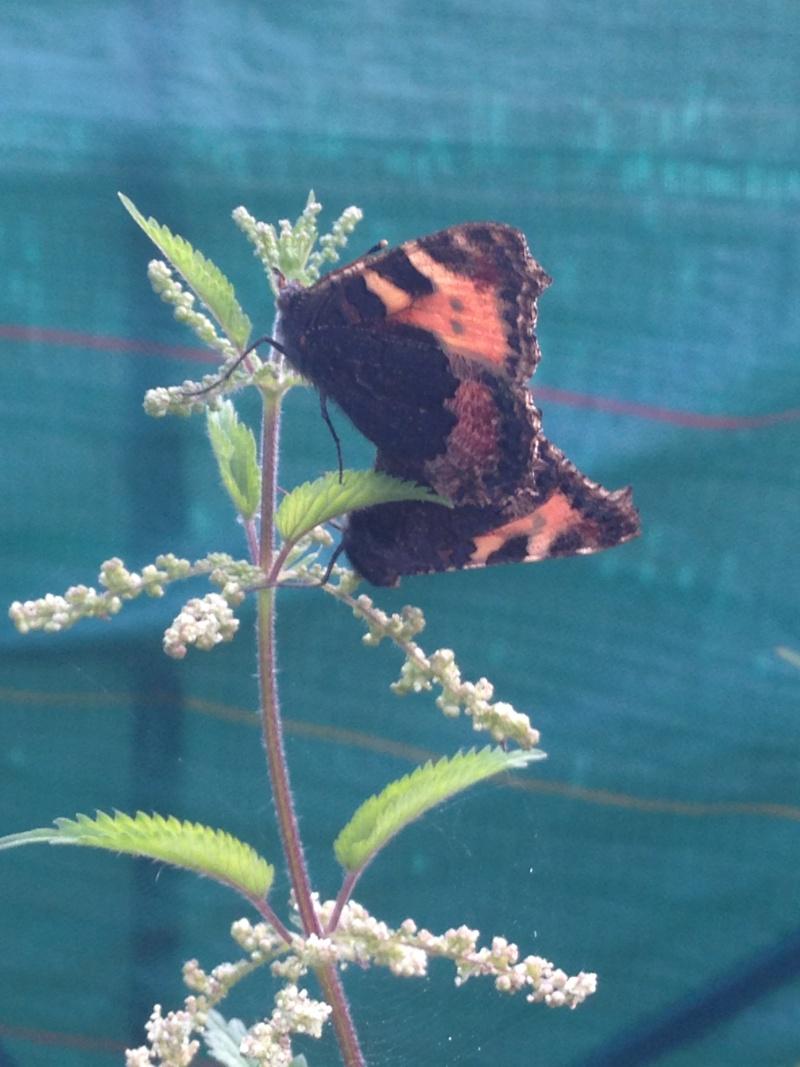 Serre à papillons. Img_0326